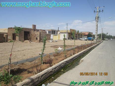 moghar-derakht kari